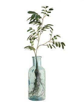 hkliving-vaasje-fles-groen-bloemen-mini-boompje-AGL4006