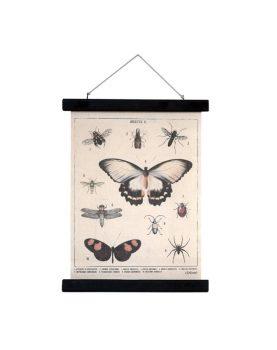hk-living-schoolplaat-insecten-M-vlinders-ASC0040